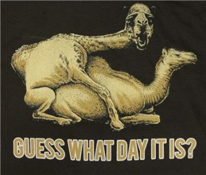 meme-camels-humping-text-guess-what-day-it-is-vocabulario-en-inglés
