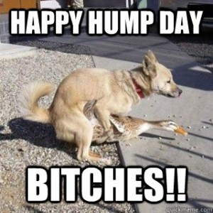 happy hump day--a dog and a goose