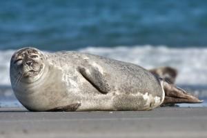 seal thanksgiving