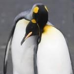 smart penguins buy diamonds