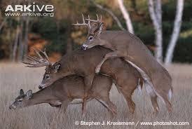 reindeer threesome